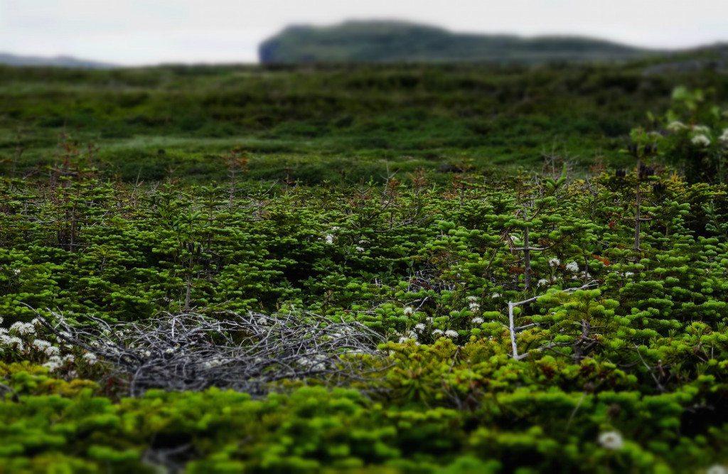 L'Ans aux Meadows landscape