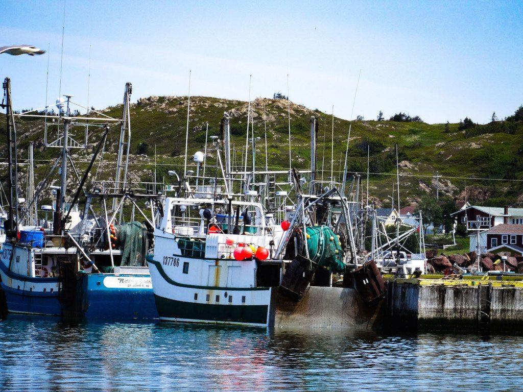 Twillingate Harbour Newfoundland