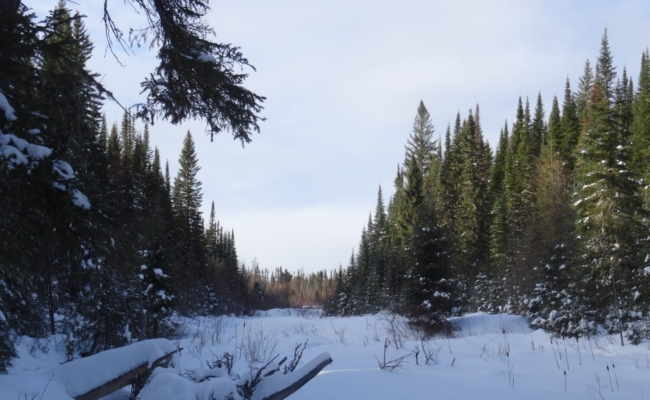 A snow covered meadow in January snow in north eastern Ontario