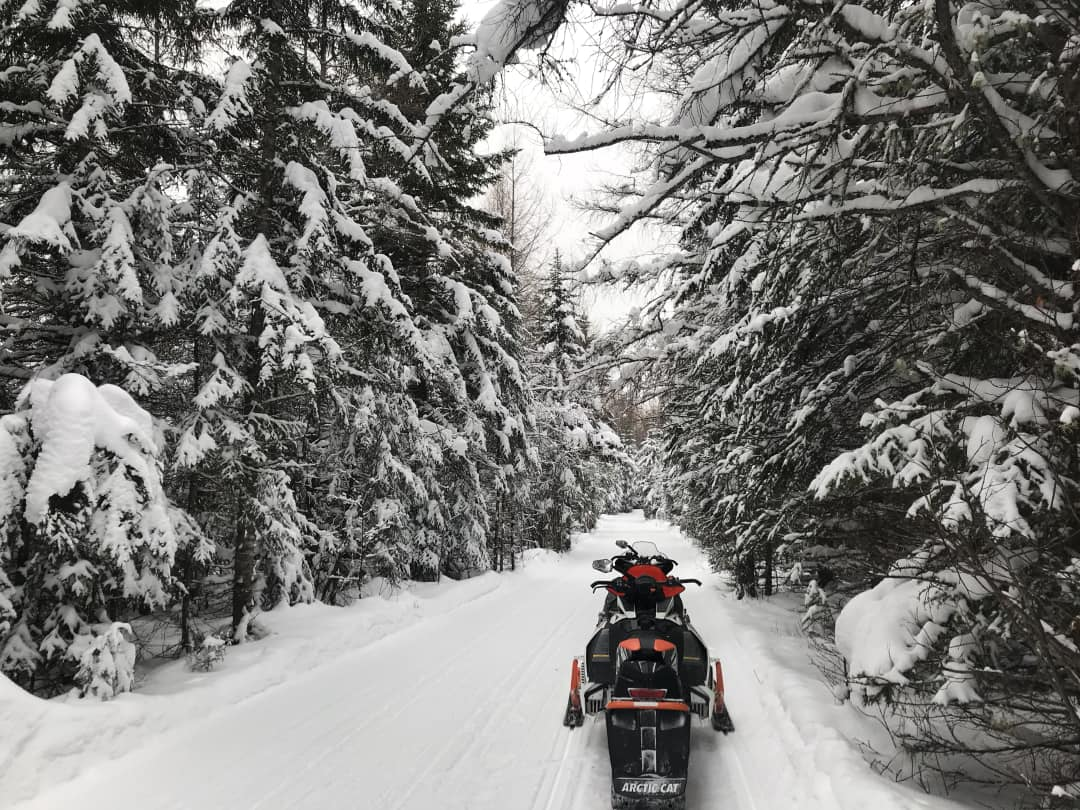 2 snowmobiles on a snow covered trail in a pine forest in nothern Ontario