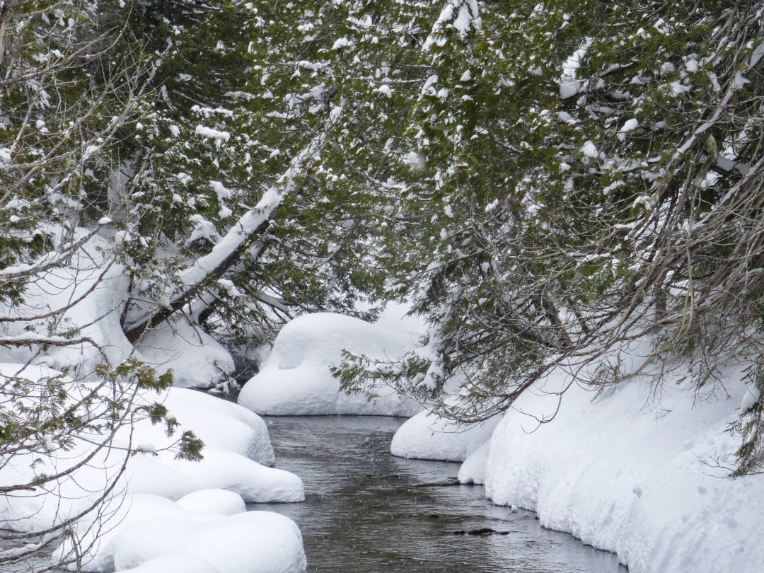 a small creek running beneath snow covered trees