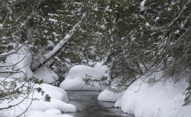 A winter scene of a babbling brook in deep snow