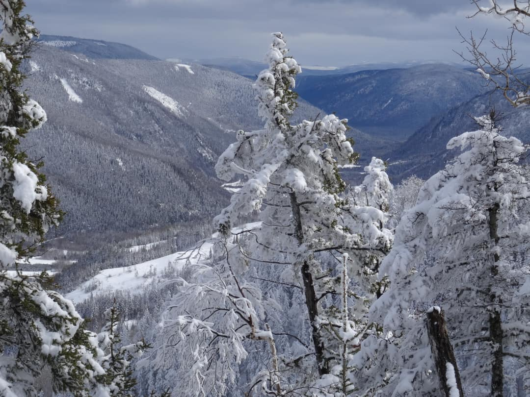 Snow covered pines on Mont-Saint-Pierre overlooking the valley