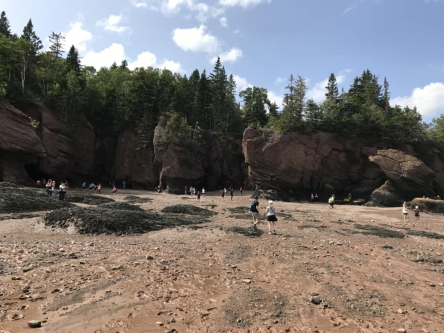 Hopewell rocks at low tide - the water will rise almost 30 feet in a few hours