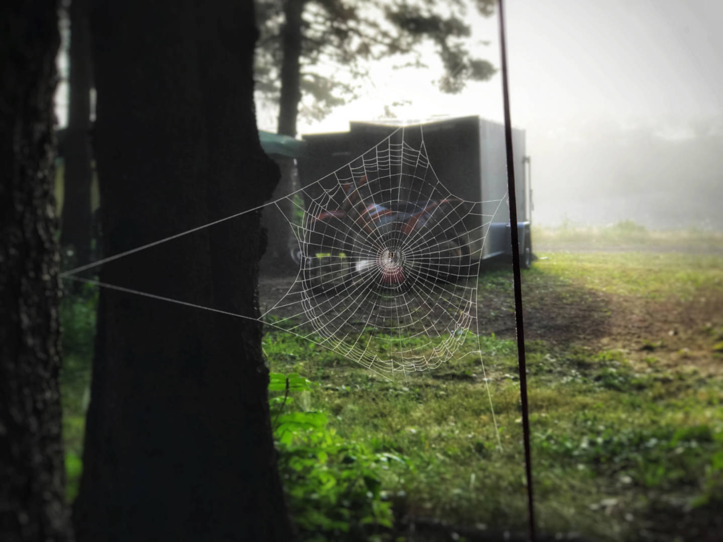 photo of a spider's web covered in morning dew