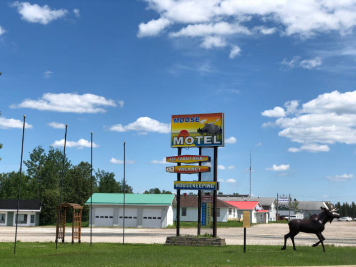 a photo of the fake moose at the Moose Motel in Smooth Rock Falls